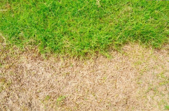 when-does-grass-stop-growing-1